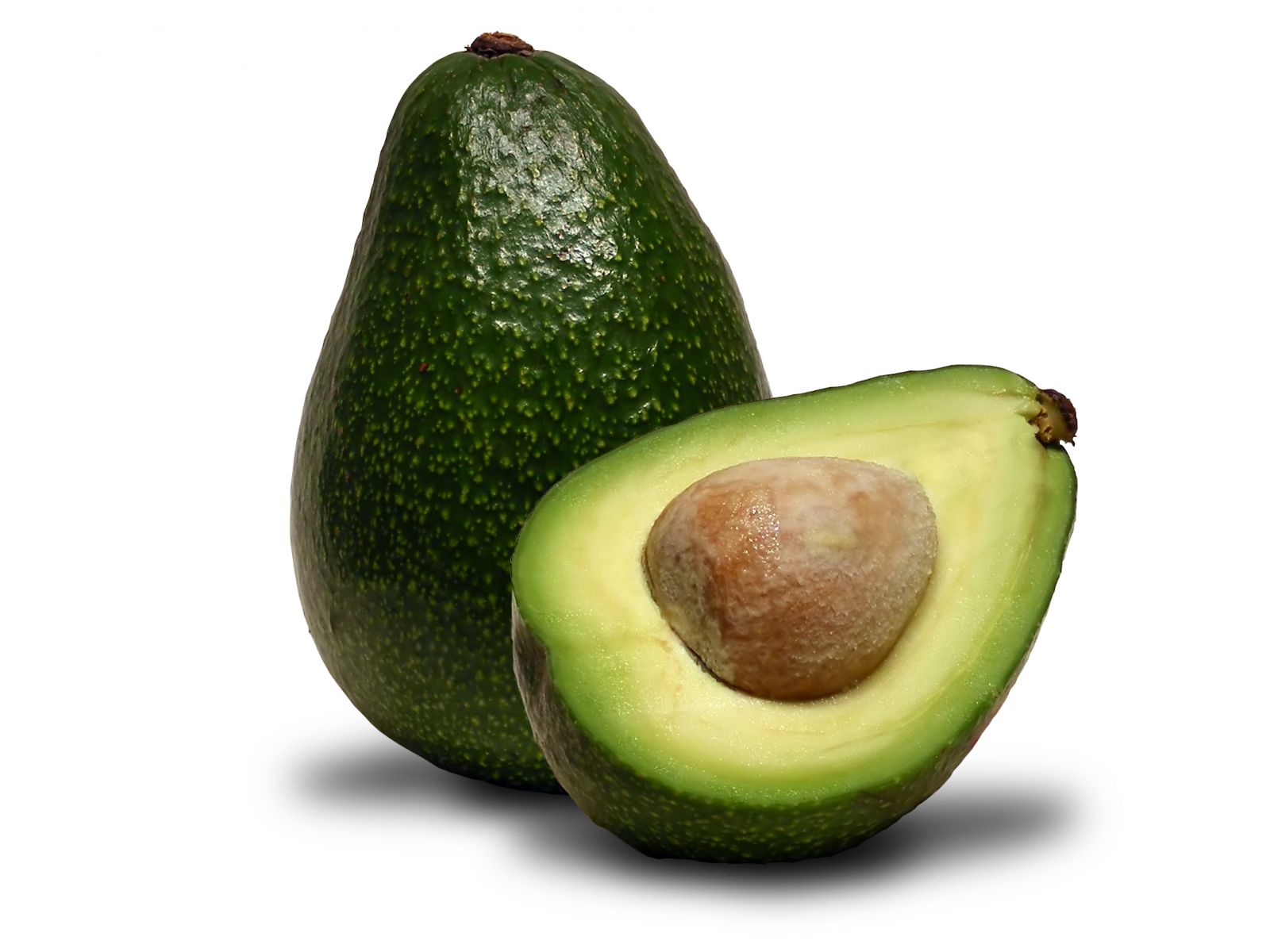 avocado leaf plasticity Avocado seeds: overview avocados are, by far, my favorite food in fact, i try to eat at least one simply put the avocado seed into a plastic bag and then crush it with a hammer (or a blunt object.